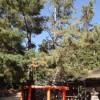 三鈷の松(さんこのまつ)